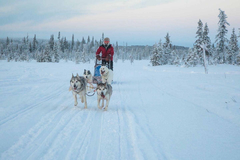 Huskies on snow
