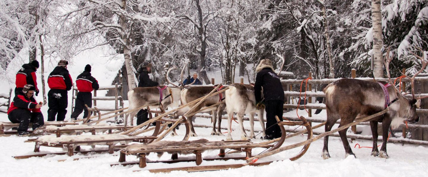 Reindeer and sledges at Konttaniemi Farm in Rovaniemi, Finland