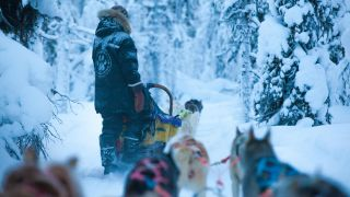 On a husky safari with Harriniva Safaris