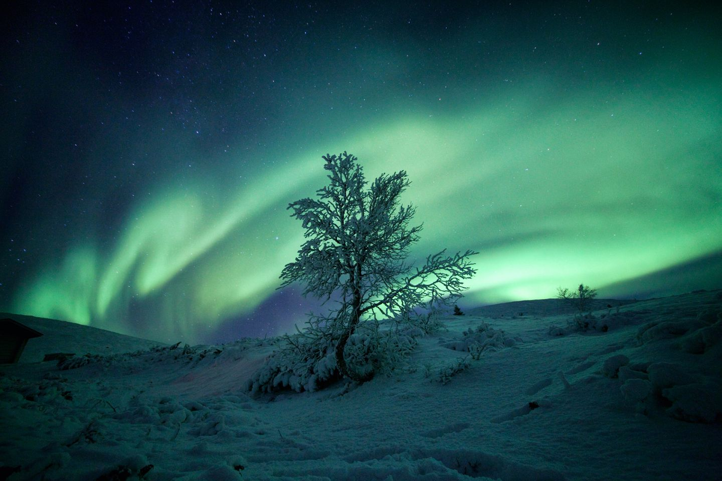 Auroras over the frozen ground in Fell Lapland