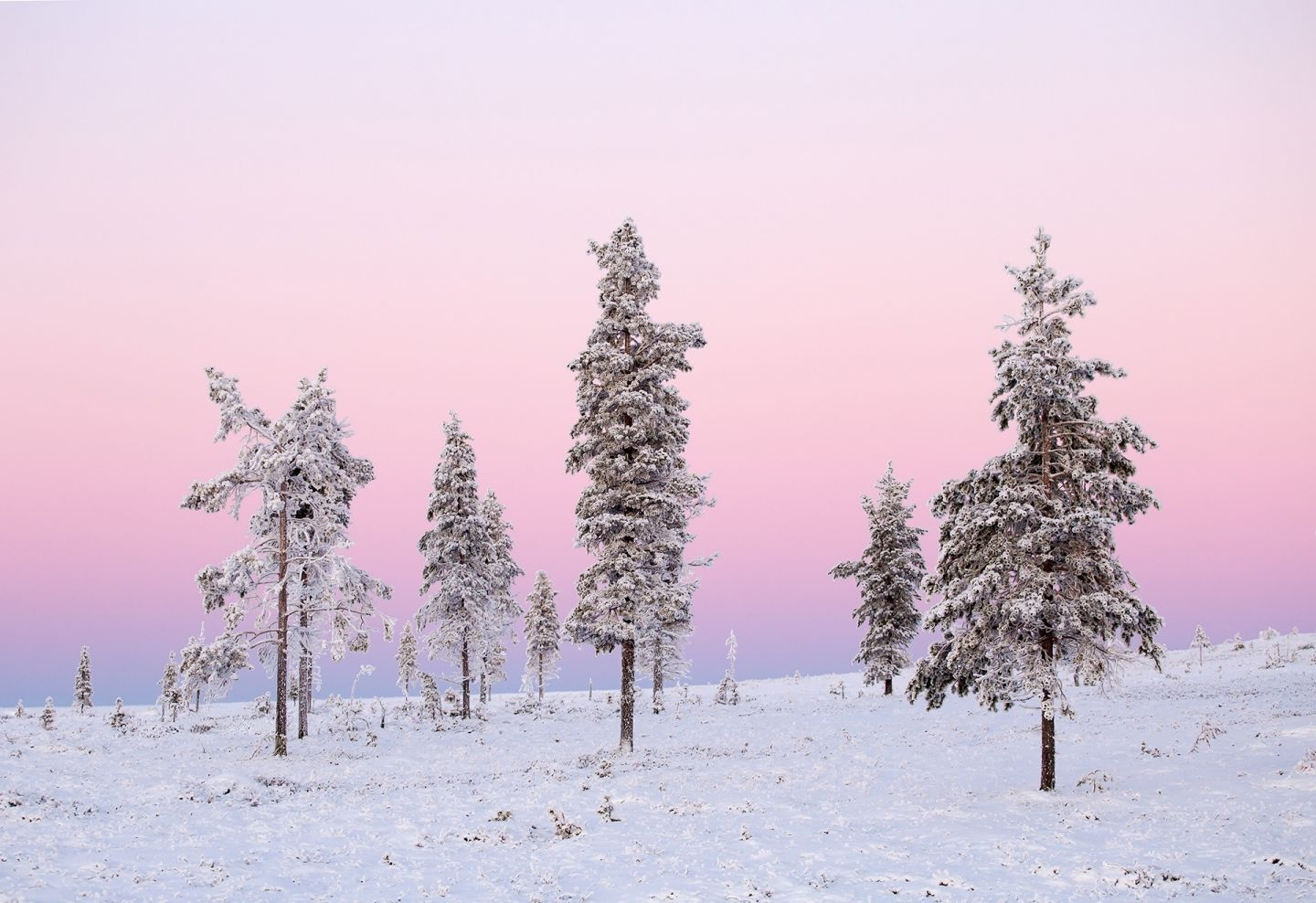 Snowy Arctic scenery with a pink sky on a winter day