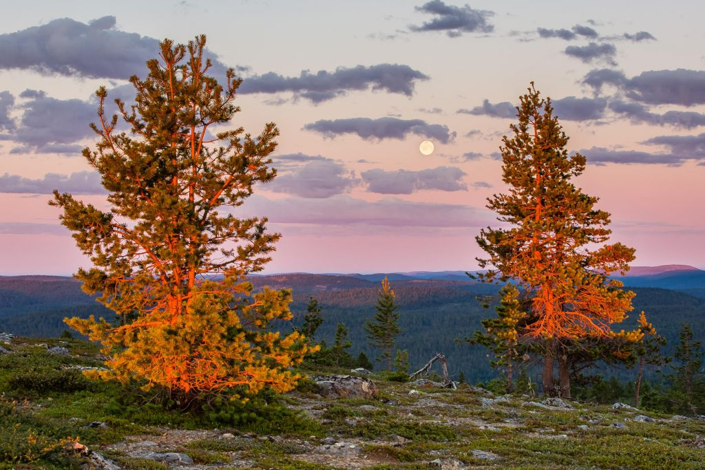 midnight sun and moon in Lapland
