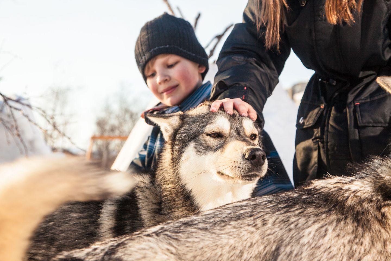 A boy and his husky dog