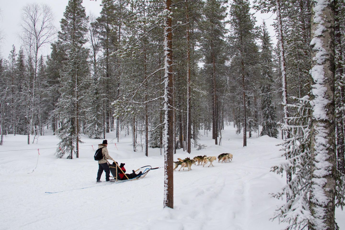 A husky ride through the forest on location in Lapland with Joe Ma