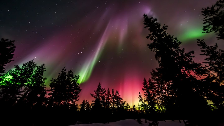 Auroras over Lapland forest
