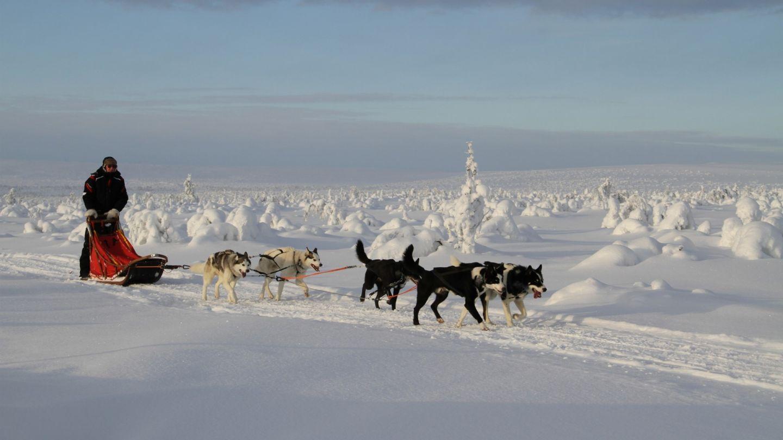 Safariysritys Hetta Huskies yrittäminen Lapissa koiravaljakko