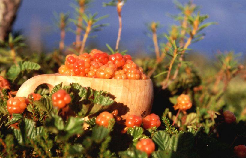 Finnish cloudberries in guksi.