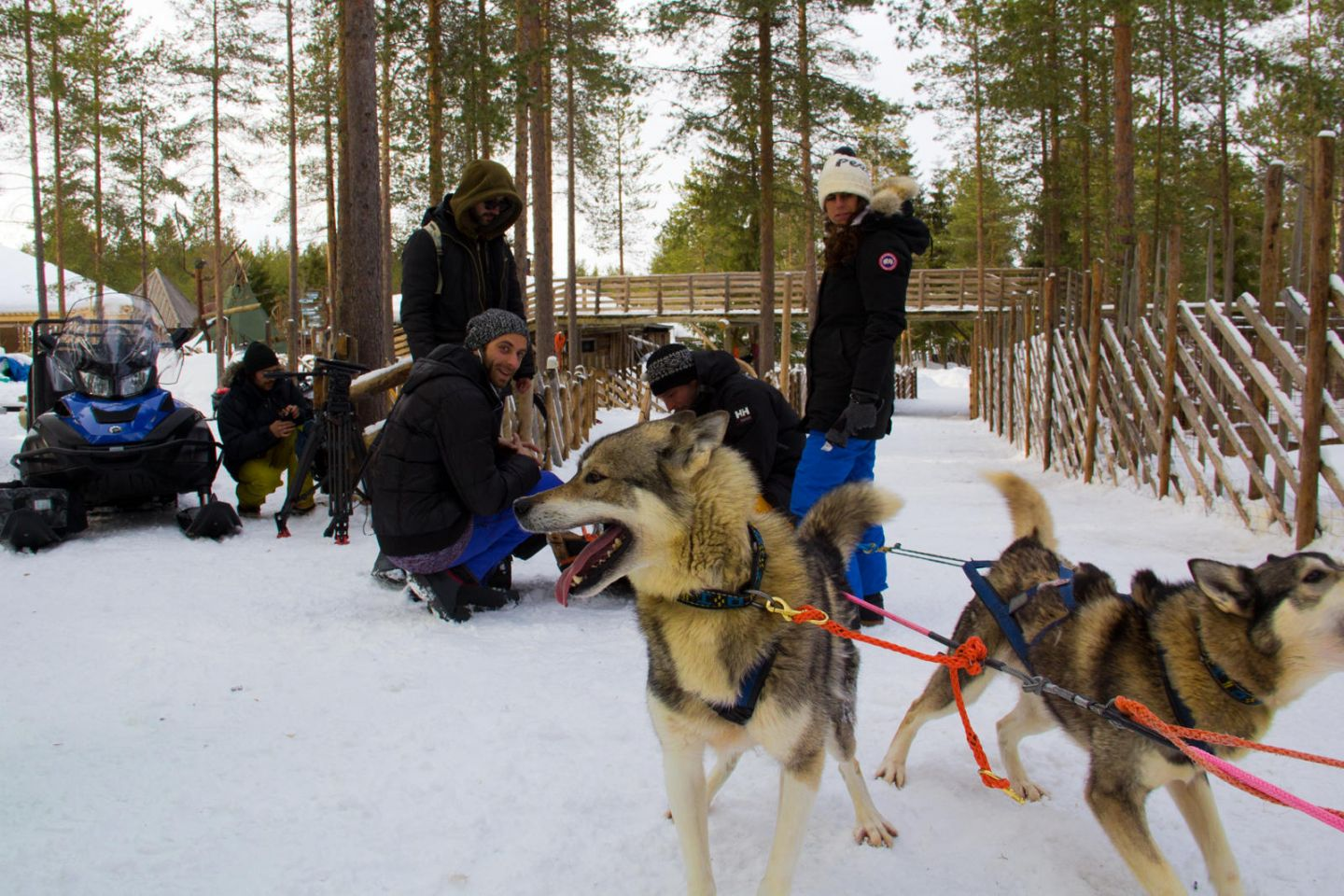 Excited huskies on location in Lapland for French travel tv show