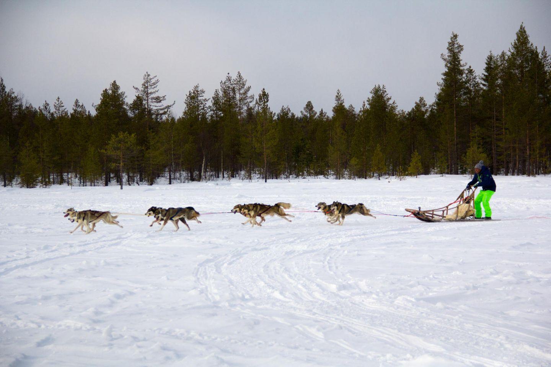 Husky ride across the snow