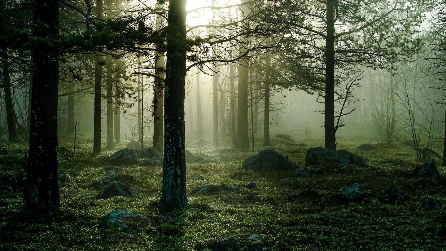 forest landscape in Lapland