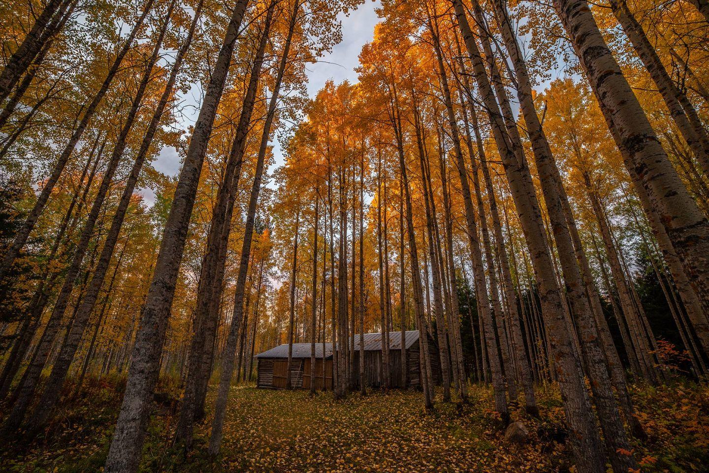 Autumn colors in Ranua, Lapland, Finland