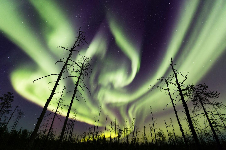 Northern lights in forest in Rovaniemi, Lapland, Finland