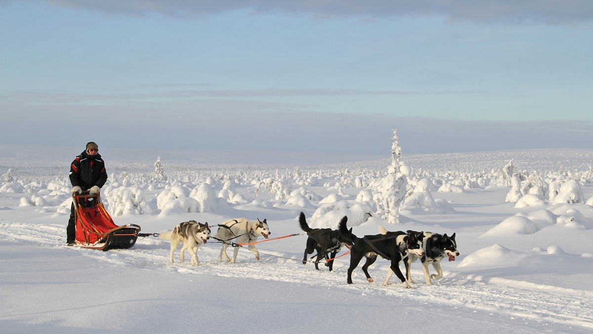 Hetta huskies in Lapland