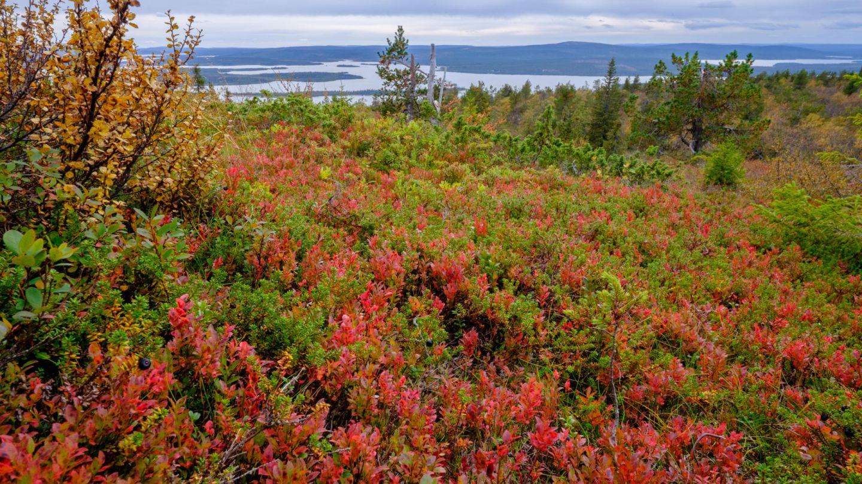 landscape | arctic seasons autumn