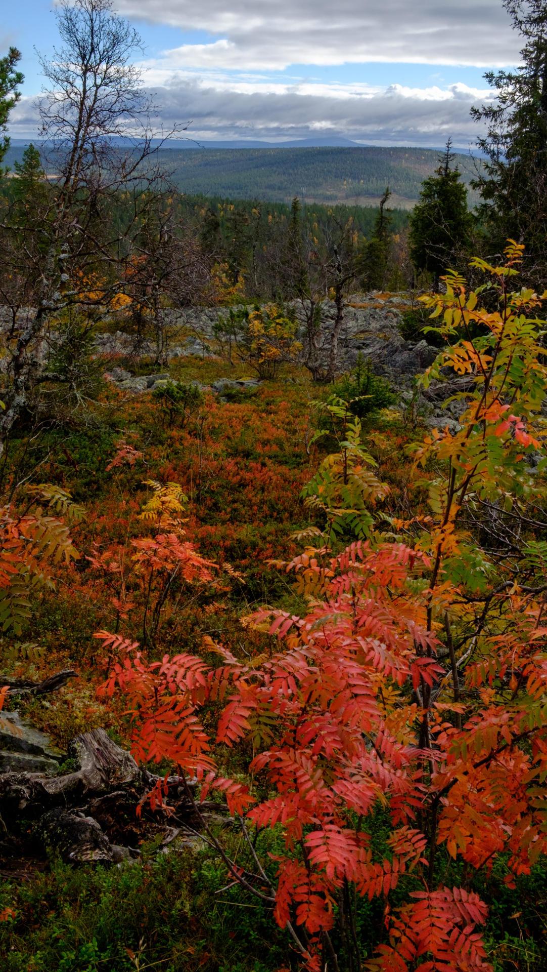 Valley in Lapland during autumn