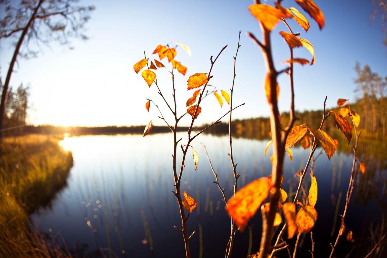 Lapland river in autumn