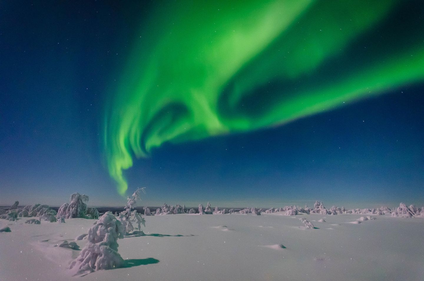 Auroras & snow in Lapland