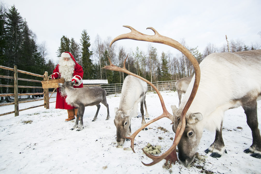 meet-reindeers-of-father-christmas