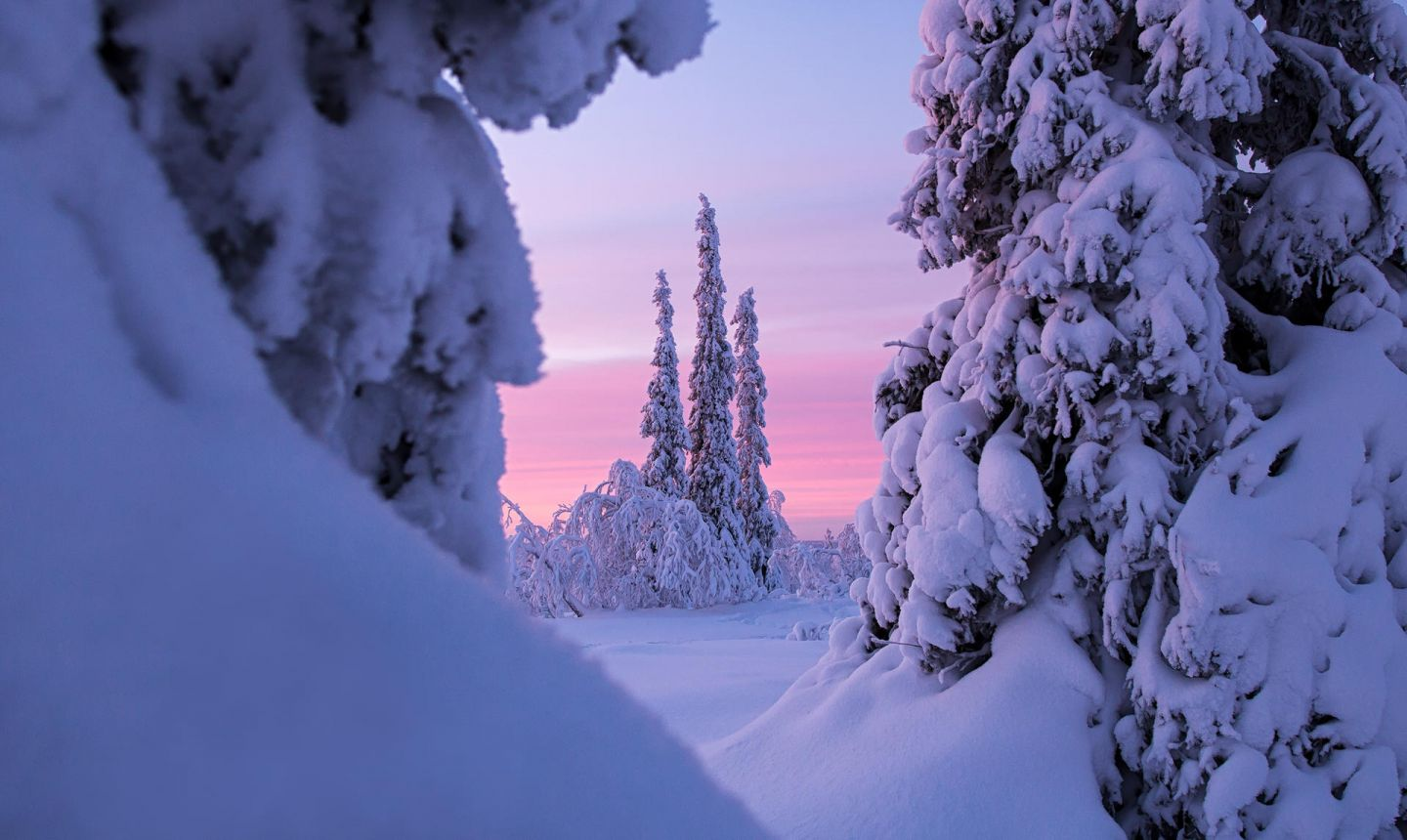 Snow capped trees in winter during Polar Night