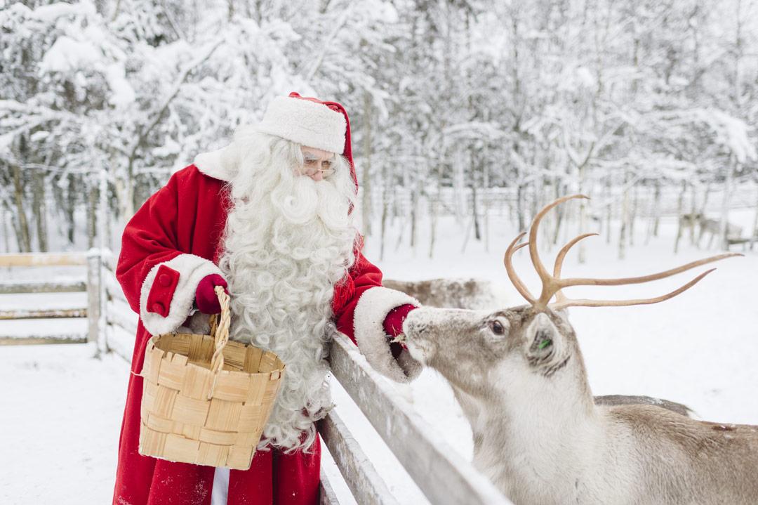 reindeers-of-santa-claus