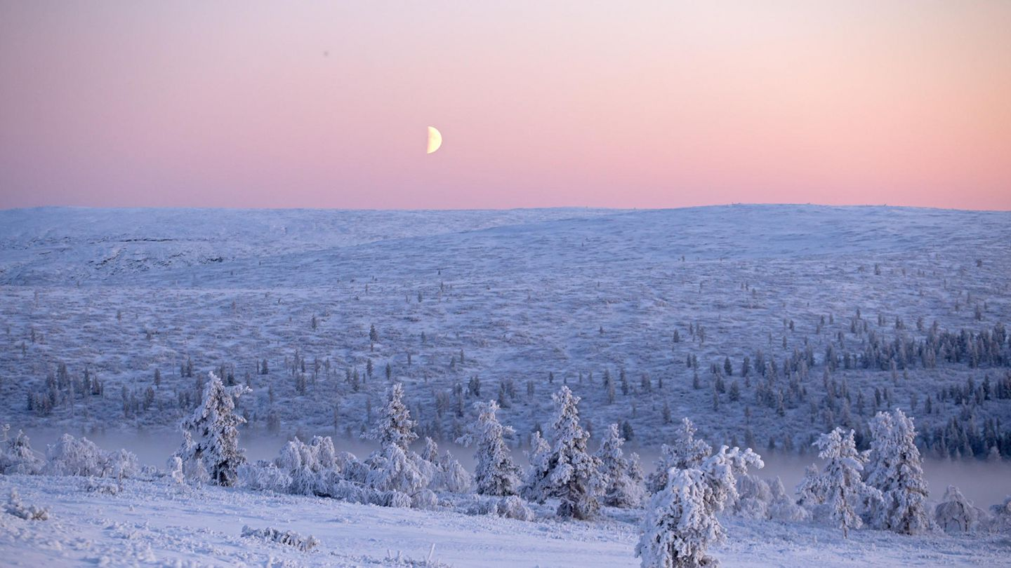 The moon shines in a pink sky during Polar Night