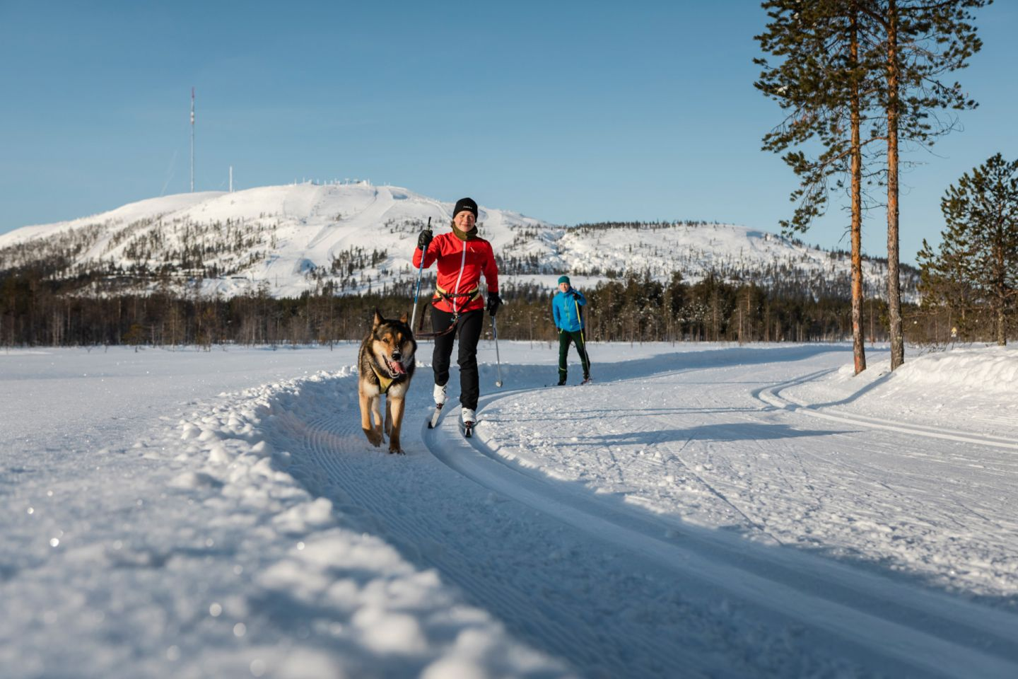 Skiing with your dog in Pyhä-Luosto