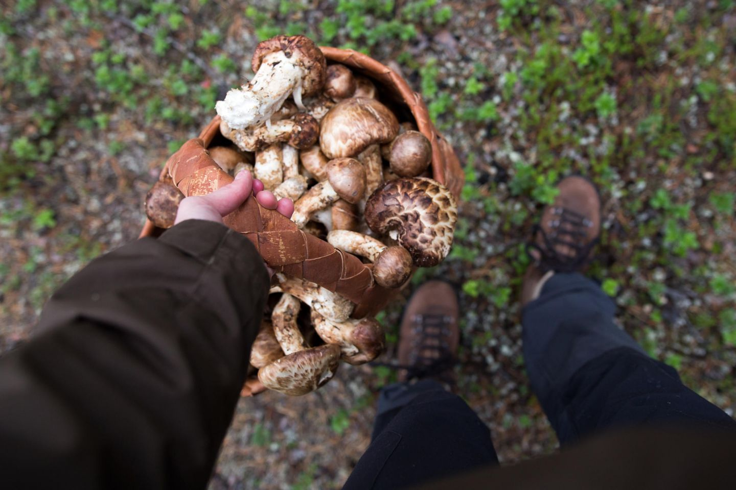 Wild mushrooms from Lapland