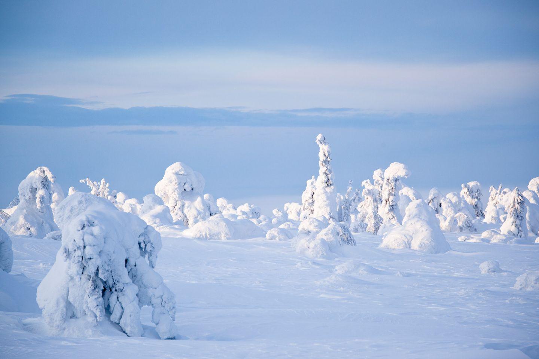 Snow-capped trees | lapin elokuvakomissio