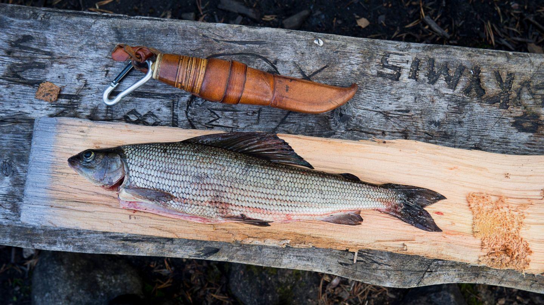 Anna Pakkanen asuminen lapissa kala