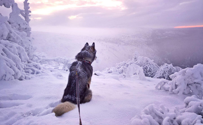 Asuminen lapissa Annan koira