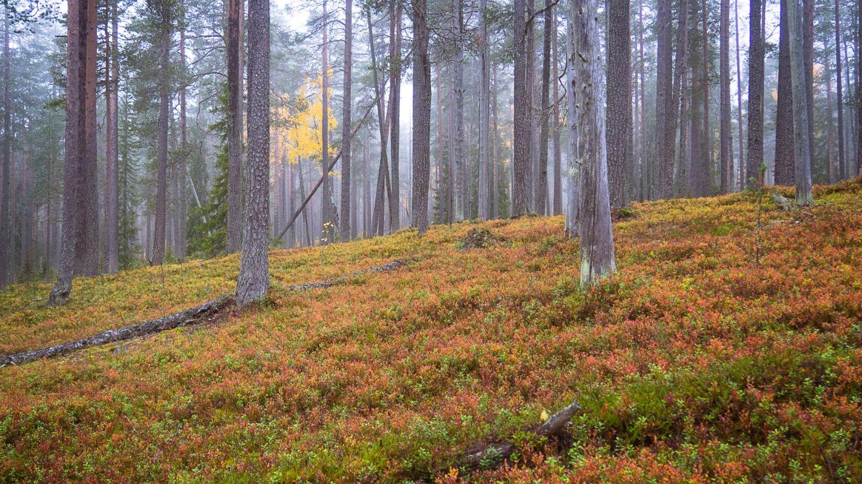 Anna Pakkanen luontokuva asuminen lapissa
