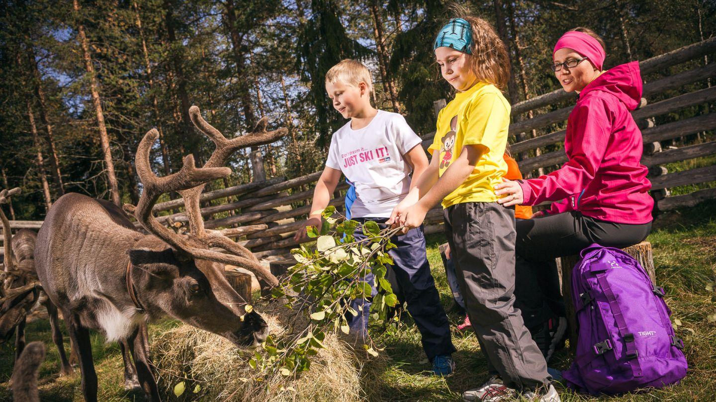Pyhä-Luosto reindeer farm in Finland
