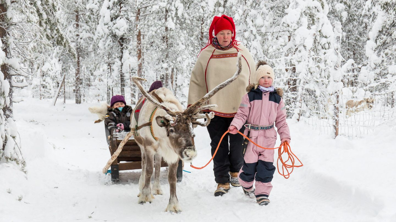 Reindeer in Ranua Lapland