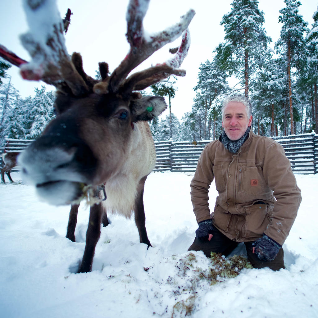 Reindeer close-up, on location with Gordon Buchanan