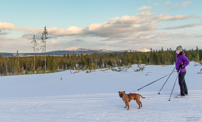 Kati Vesalainen ja Jonne Vaahtera hiihtämässä muutto lappiin