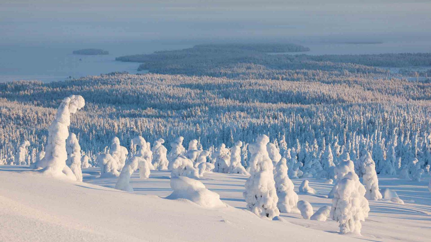 Snowy shapes at Riisitunturi in Posio Finland
