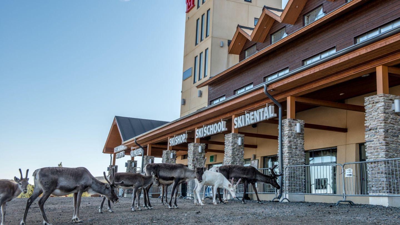 Lapland real estate