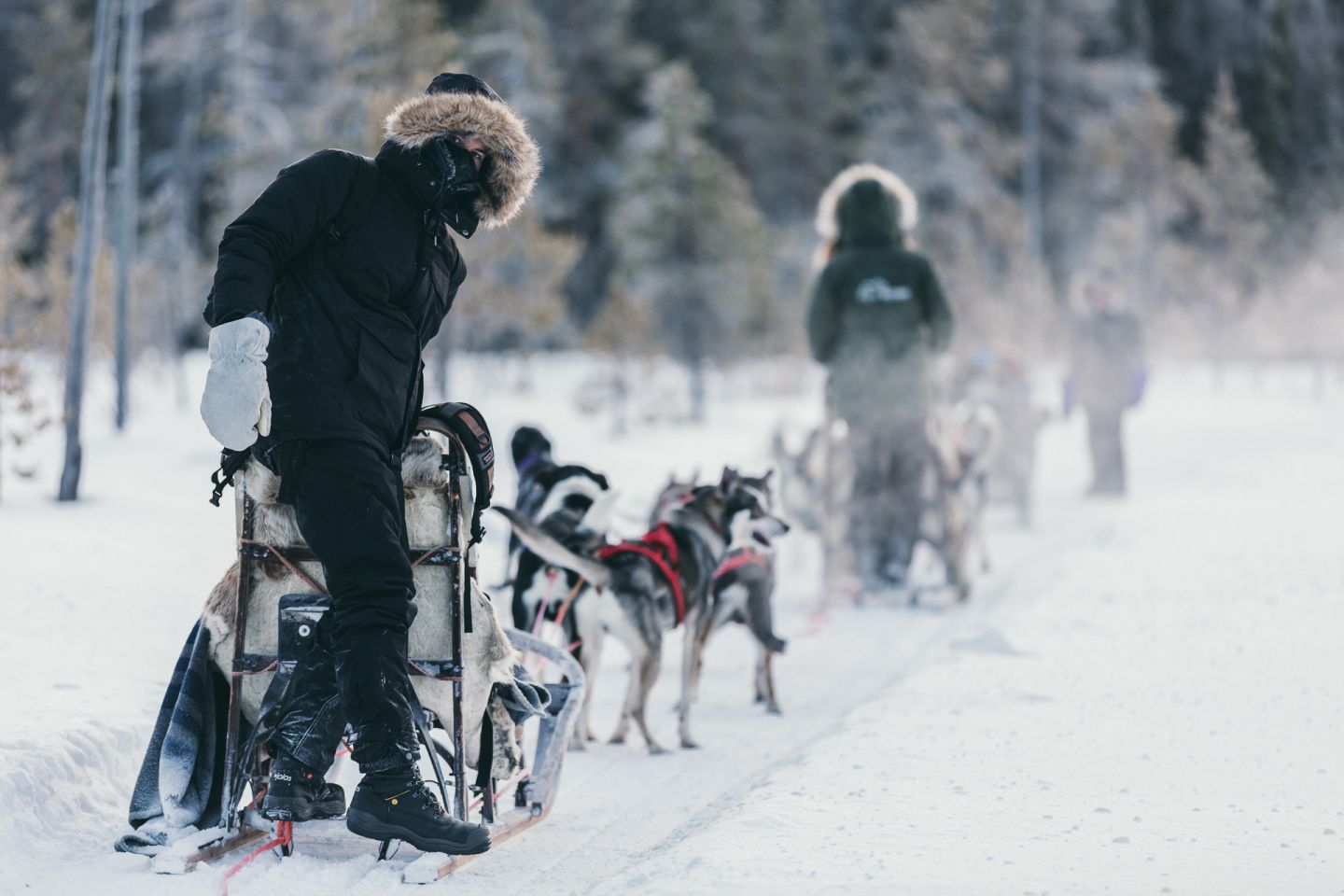 Husky safari in Levi, Finland