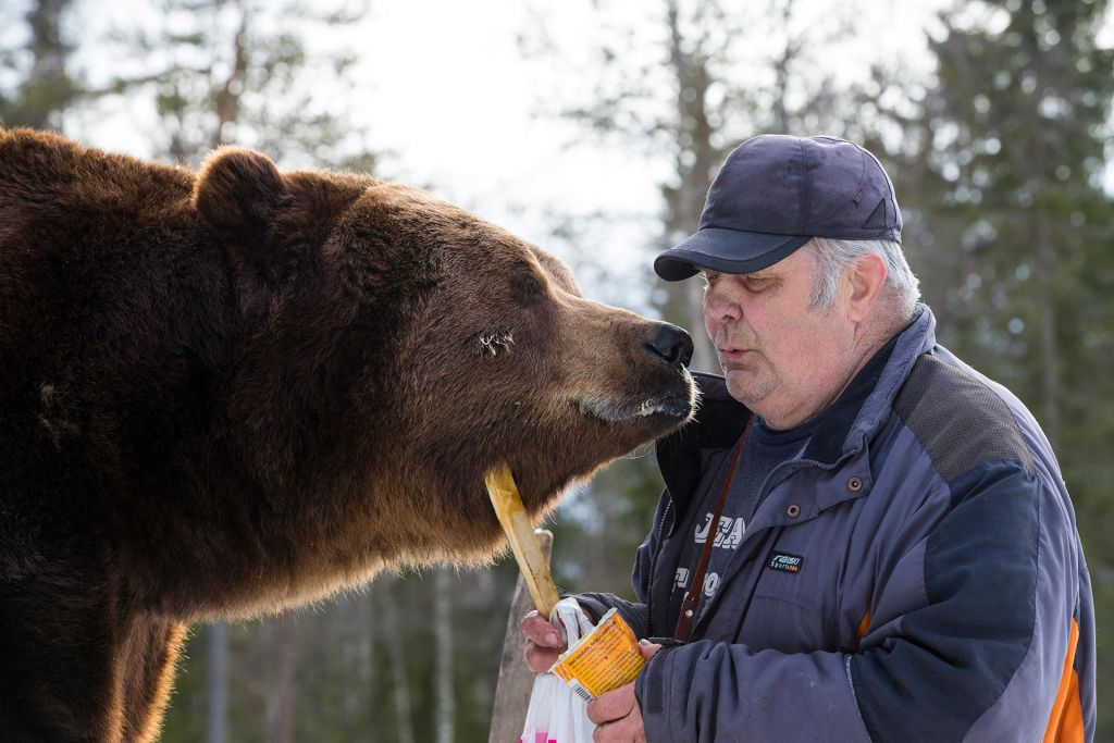 Sulo Karjalainen and his bear, Jussi
