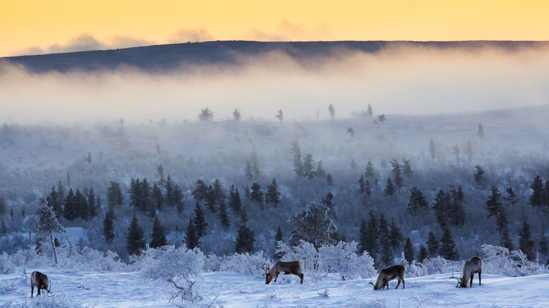 Inari-Saariselkä talvella.