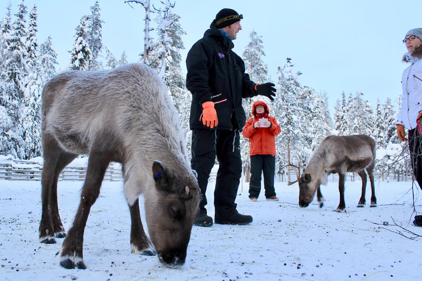 Jarko explains about reindeer at the farm in Salla, Lapland