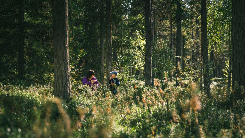 Summer forest hiking trip in Sodankylä, Finland
