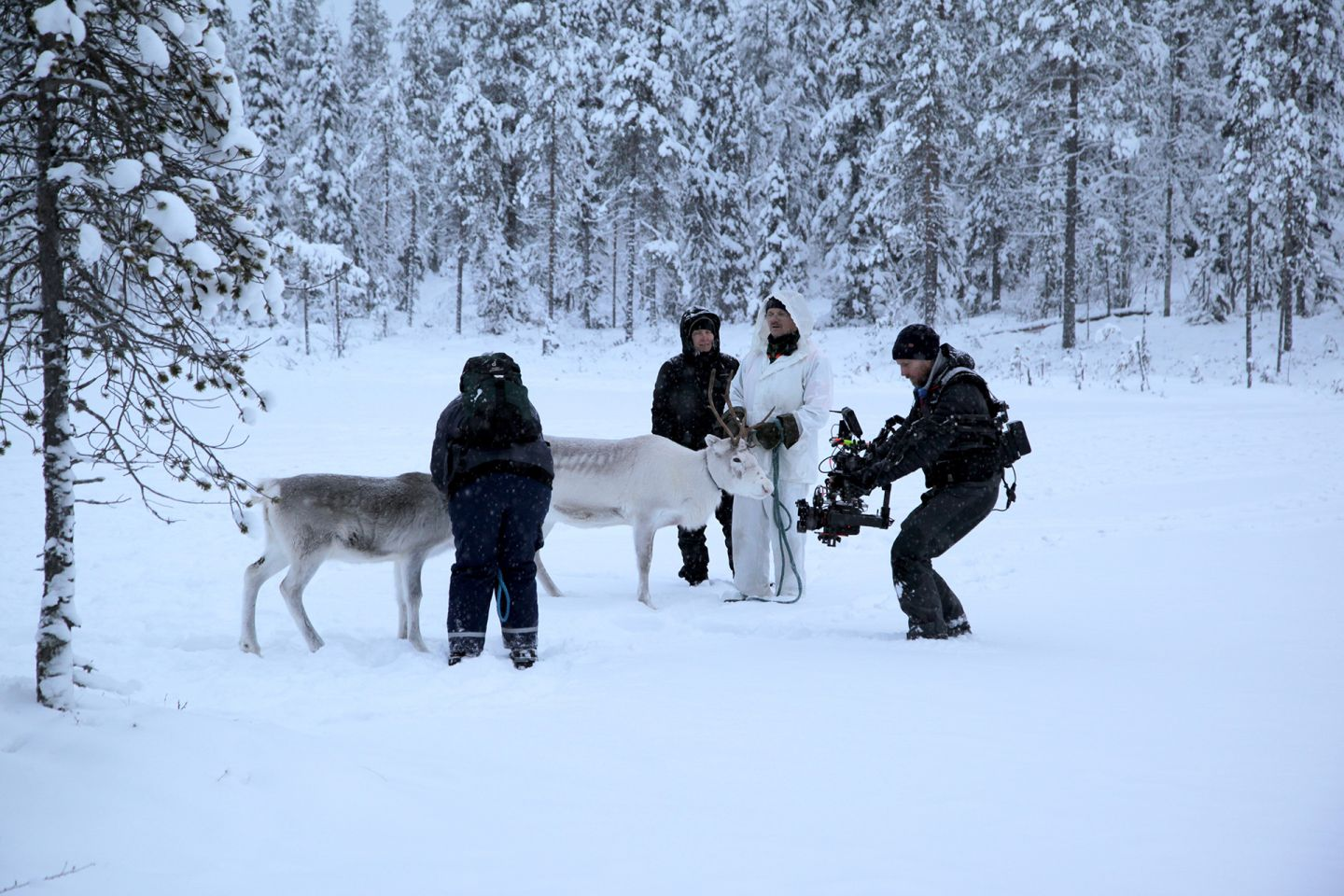 Crew filming reindeer, during production of A Reindeer's Journey in Lapland