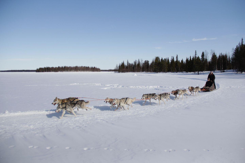 Sled dog safari in Lapland