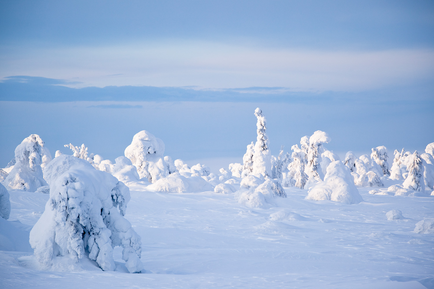 snow-capped trees | film location lapland