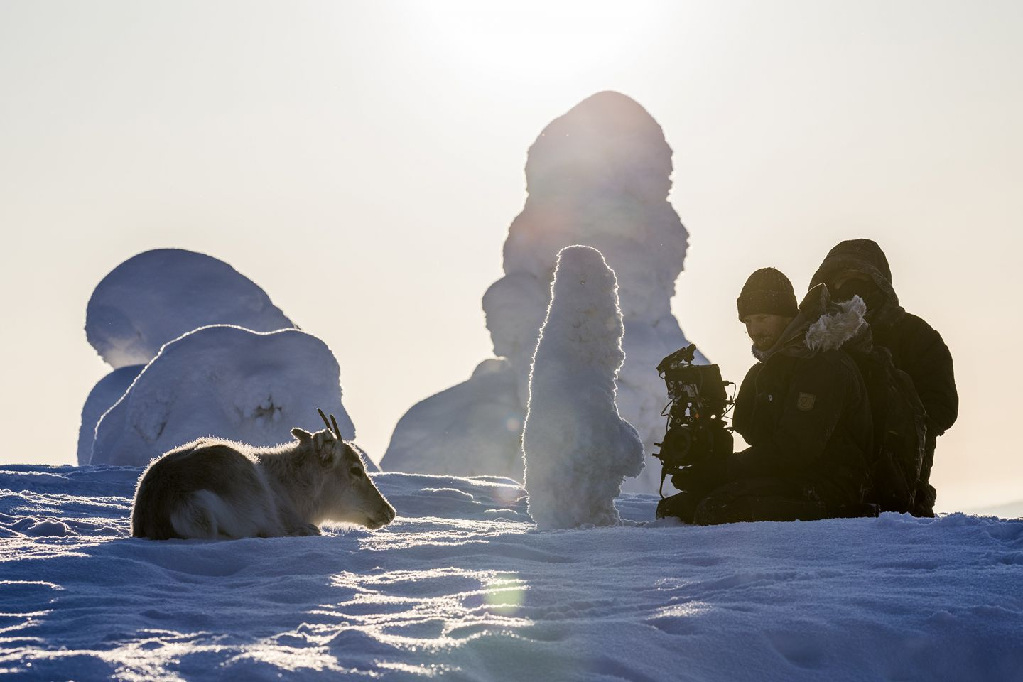Filming reindeer in snowy Riisitunturi National Park, on production of A Reindeer's Journey