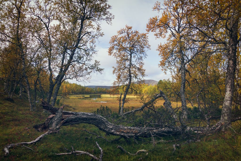 Foliage in Finland, by landscape photographer, Mark Roberts