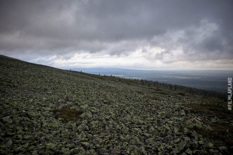 Arctic forest in Ylläs, Kolari, Finland
