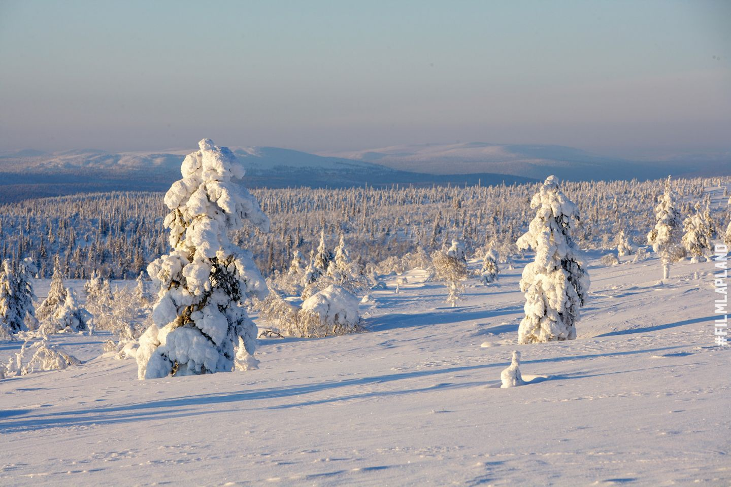 Snow-crowned trees on a hillside in Inari, Finland