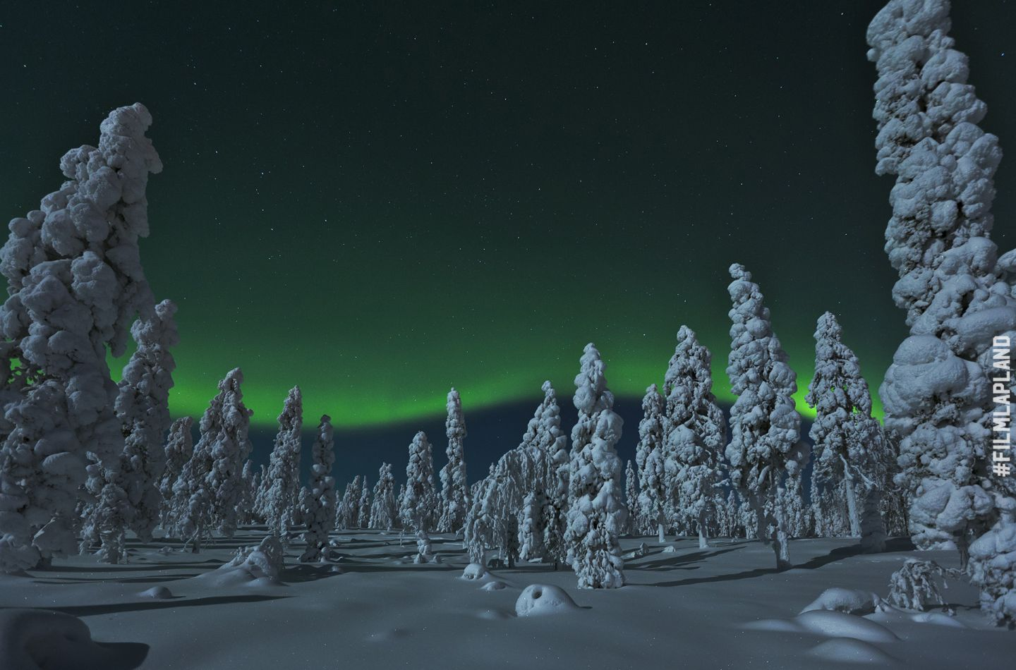 Northern Lights over snow-capped trees in Rovaniemi, Finland
